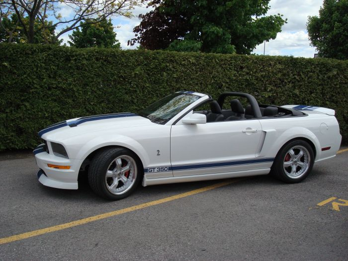 Mustang Blanche Conv